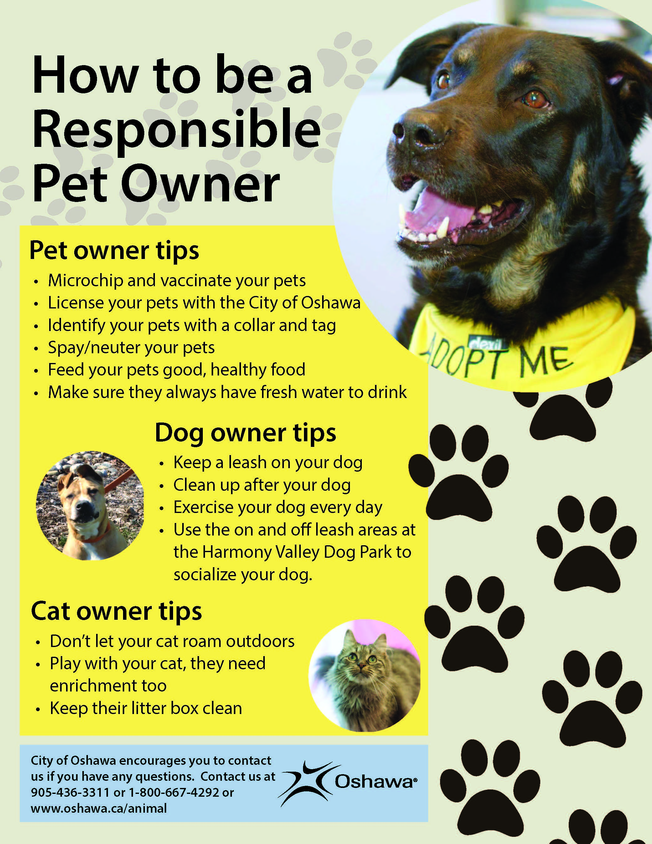 responsible pet owner February is responsible pet owners month owning a pet is a privilege, but the benefits of pet ownership come with responsibilities a responsible pet owner commits to the relationship for the life of the pet recognizes that pet ownership requires an investment of time and money obeys local laws and ordinances regarding keeping a pet insures.