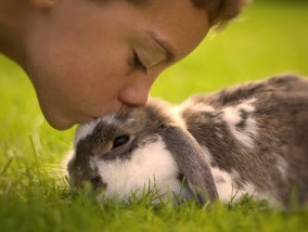 boy kissing a rabbit