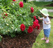 Toddler smelling flowers in a garden